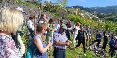 Turismo Agrícola nos Canhas - Cana de Açúcar